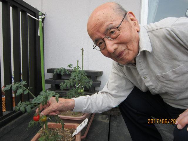 プチトマト栽培